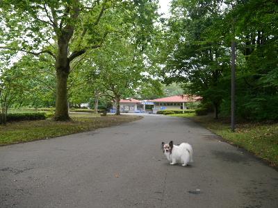 2012昭和記念公園4.JPG