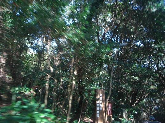 足摺亜熱帯自然植物園.jpg