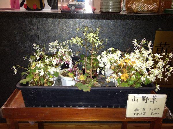 20121121山野草