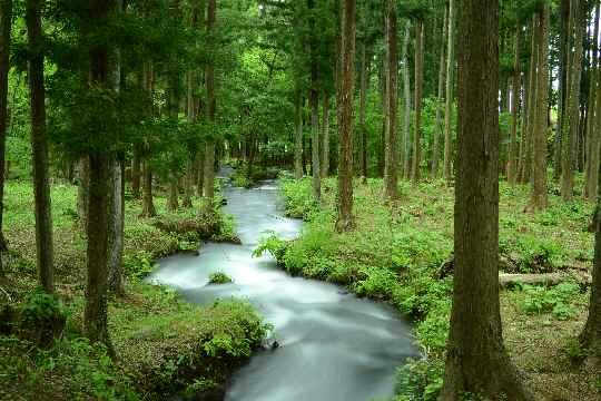 水林自然林 | 東北地方の山と花...