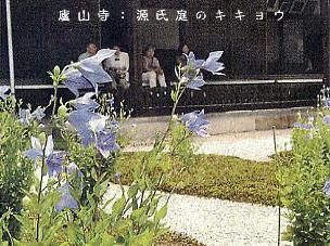 廬山寺:源氏庭のキキョウ.JPG
