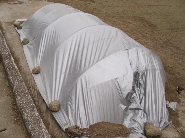 隣の畑の苗代20120601