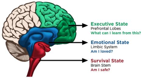 感情脳と生存脳.png