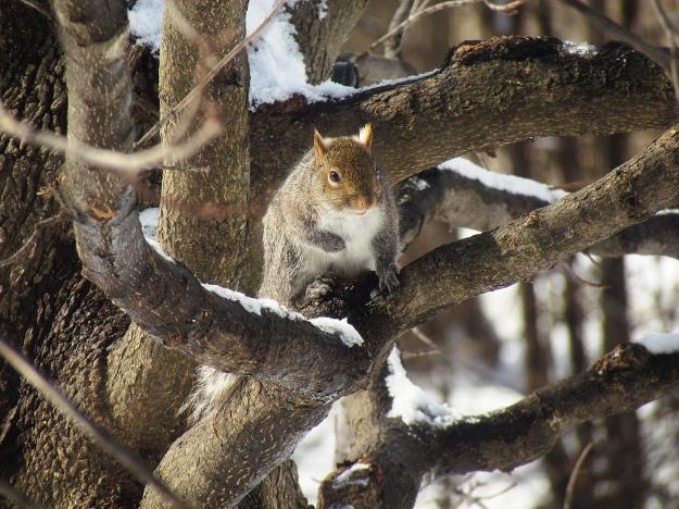+0222 friend squirrels02.jpg
