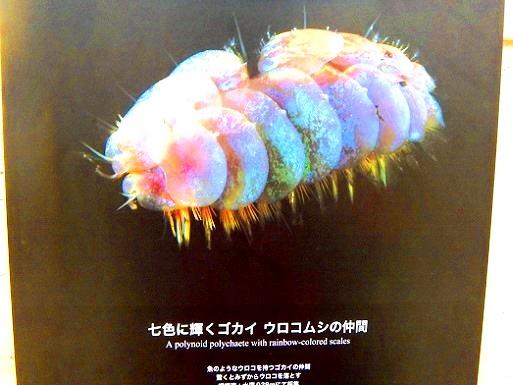 美しい深海の生物.jpg