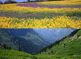 綺麗な花々…。雄大な自然の景色。
