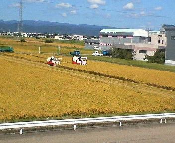稲刈り_2.jpg