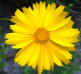 20120602 silgyecheon flower 13.jpg