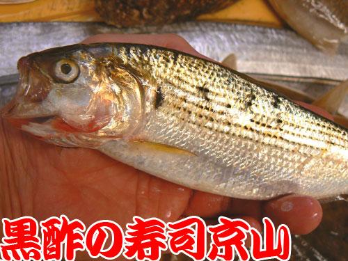 千代田区 寿司 出前 九段北.jpg