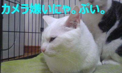 Image410.jpg