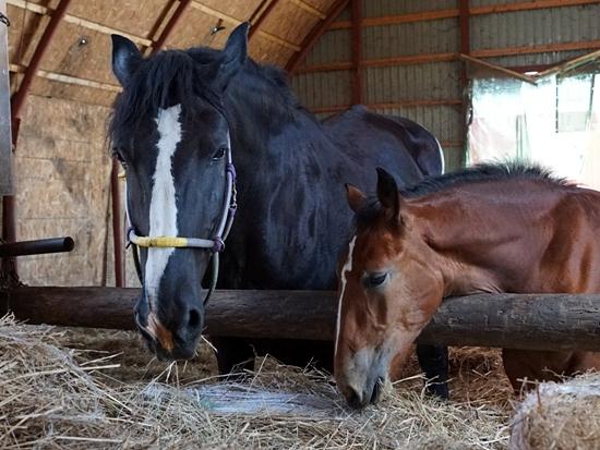 アースファーム角山農場 ばん馬