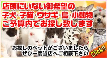 ペットお探しバナー.jpg