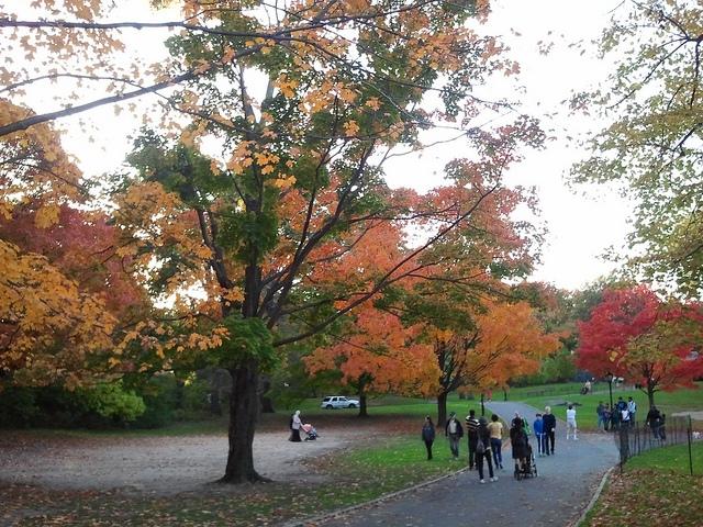 1107 central park autumn.jpg