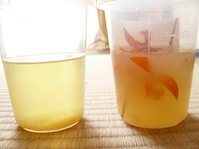 レリア・カウツキアナ入りりんごジュース20120504