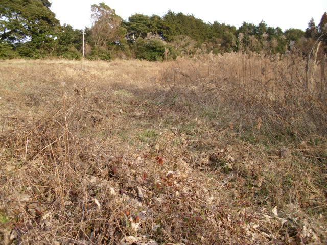 山の畑20120216