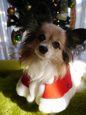 2012クリスマス1.JPG