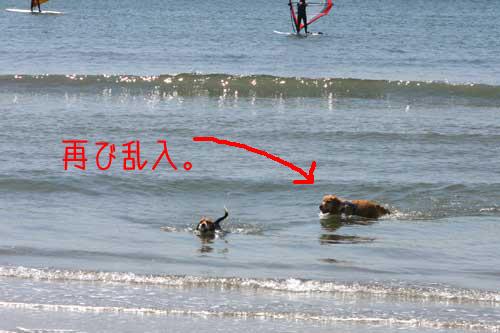 02_dog_sea5.jpg
