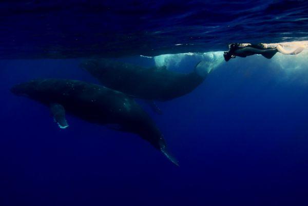 ザトウクジラの画像 p1_14