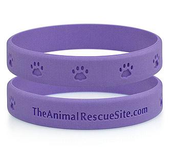 purpleband.jpg