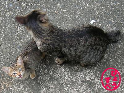 撃たれた猫の写真