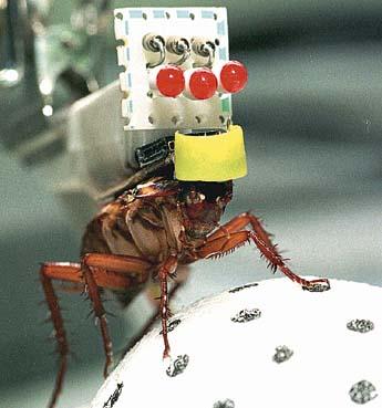 新昆類実験
