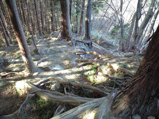 木の根が露出した急な斜面