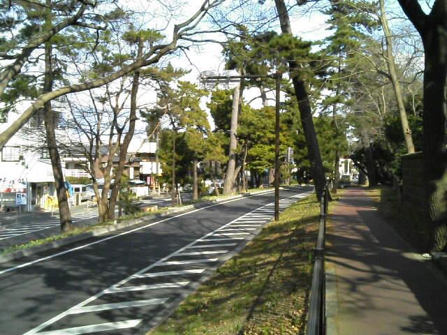 旧東海道の松並木