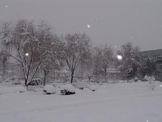 07年1月中国雪