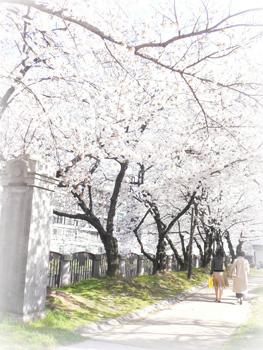 桜2009_4