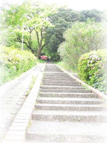 植物園の階段