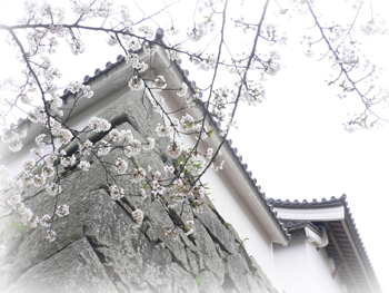 桜2009_6