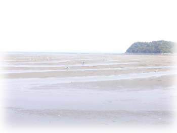 潮干狩り1