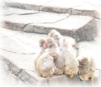 動物園のお猿