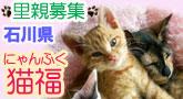 猫福~にゃんぷく~