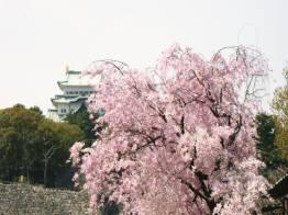 枝垂桜と名古屋城