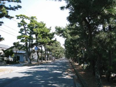 舞阪松並木
