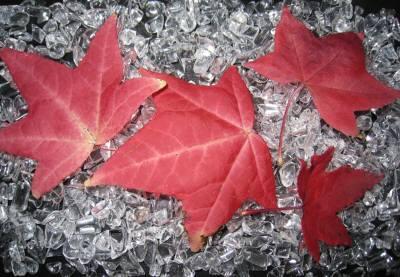 紅葉落ち葉
