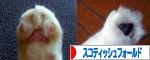 猫ブログ投票ボタン