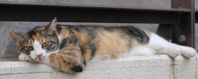 BLOG_TOP用猫写真