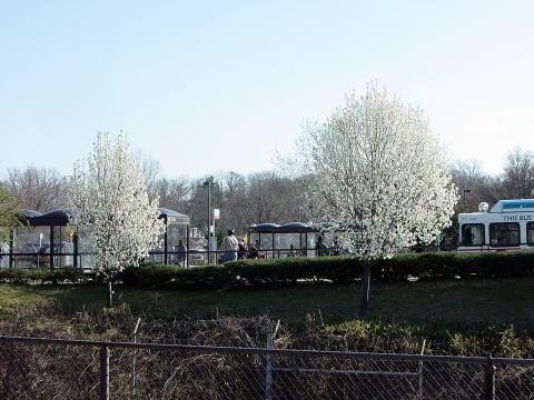 ワシントンの春