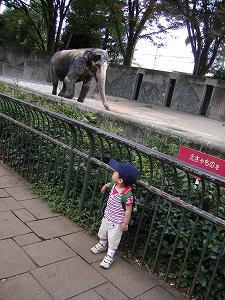 ゾウの花子