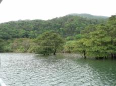 浦内川・1