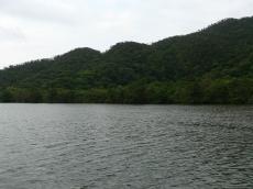 浦内川・2
