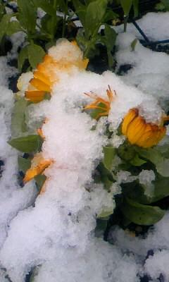 090227初雪2