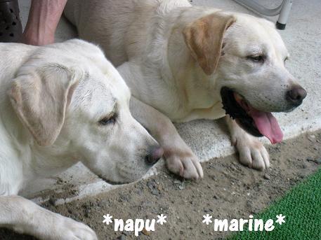 20080816marinenapu