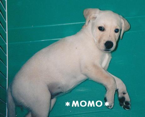 momopuppy20080209