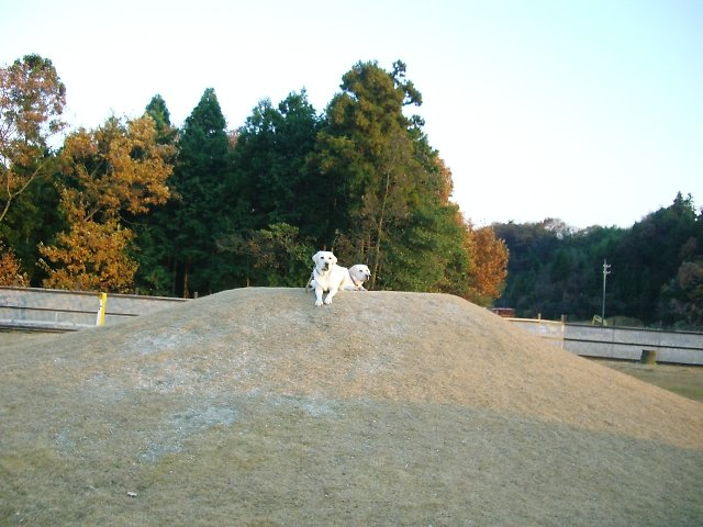 20061217-3