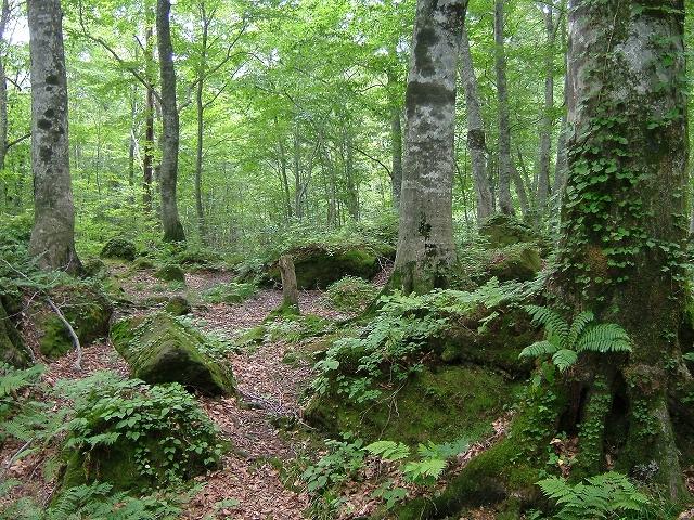 森林あれこれ6     �B