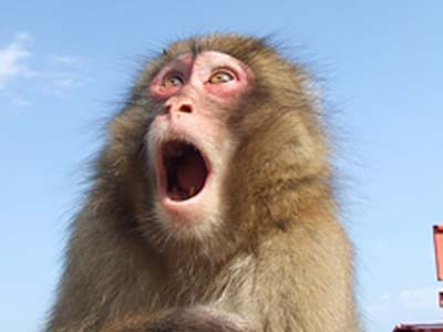 サルもびっくり!の熱川館お得情報♪