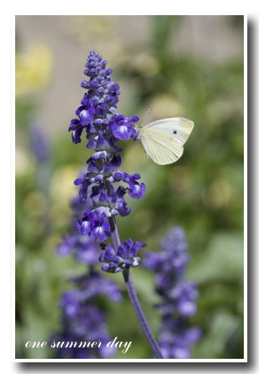 花と蝶 copy.jpg